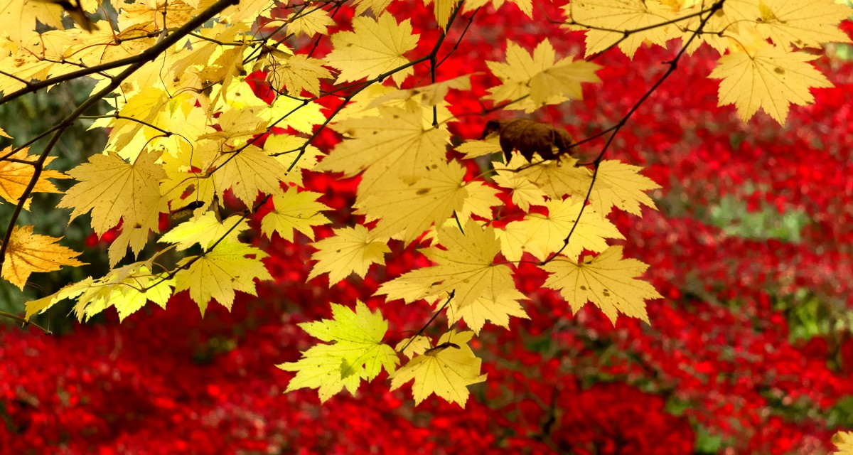 Improve autumn colours with Google's Contrast Colour Range filter